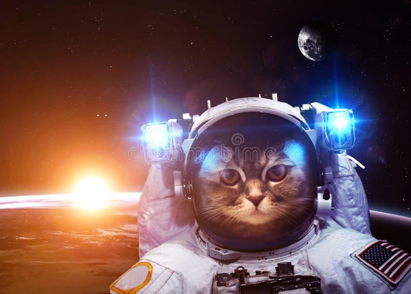 Um gato do astronauta flutua acima da terra As estrelas fornecem imagem de stock royalty free