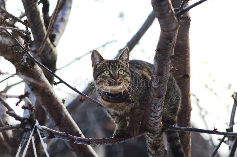 Um gato doméstico caça para um pássaro na manhã imagens de stock royalty free