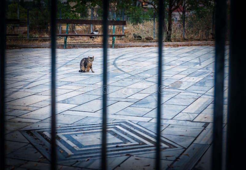 Um gato em um parque atrás da cerca da barra de metal foto de stock royalty free