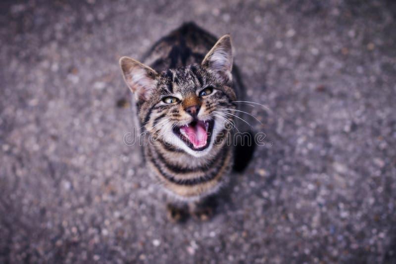 Um gato em um stituation irritado imagens de stock royalty free