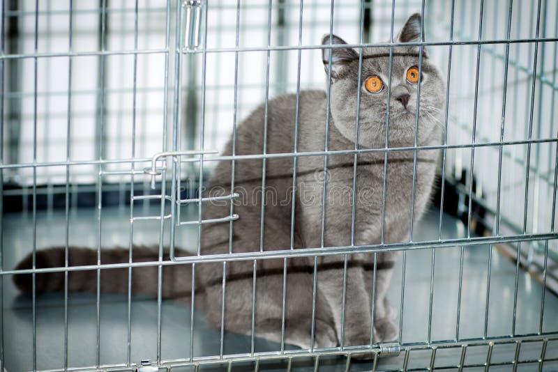 Um gato em uma gaiola fotos de stock royalty free