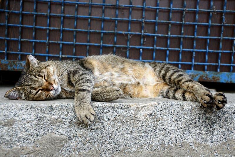 Um gato listrado cinzento dorme em um assoalho de pedra perto de uma cerca com uma estrutura foto de stock royalty free