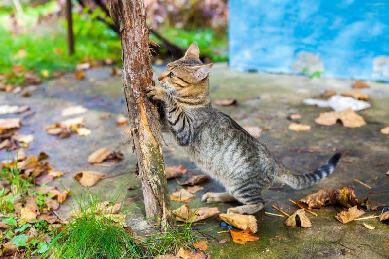 Um gato mói suas garras contra um polo de madeira fotos de stock