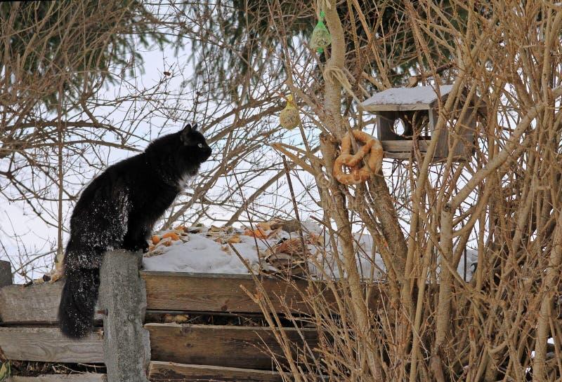 Um gato na caça do pássaro imagem de stock royalty free