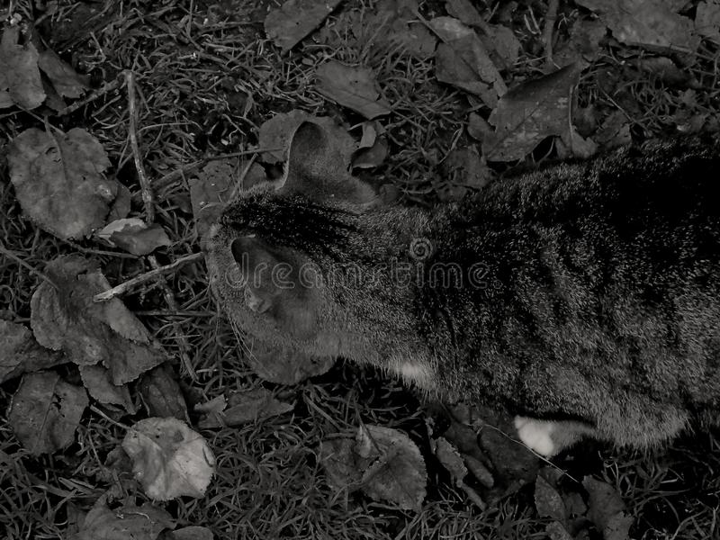 Um gato na terra foto de stock