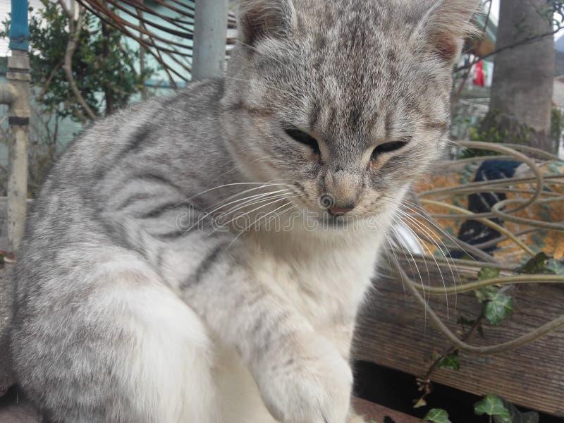 Um gato pequeno levanta para um compartimento animal foto de stock