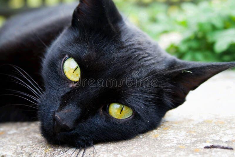 Um gato preto foto de stock