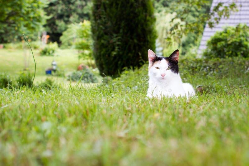 Um gato que encontra-se na grama fotografia de stock royalty free