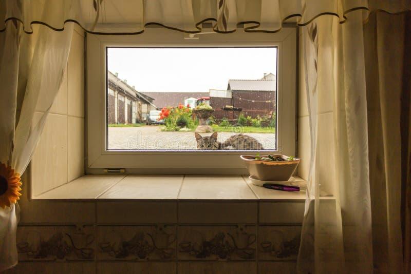 Um gato que senta-se sob a chuva no pátio e que olha à janela da casa da adega imagem de stock