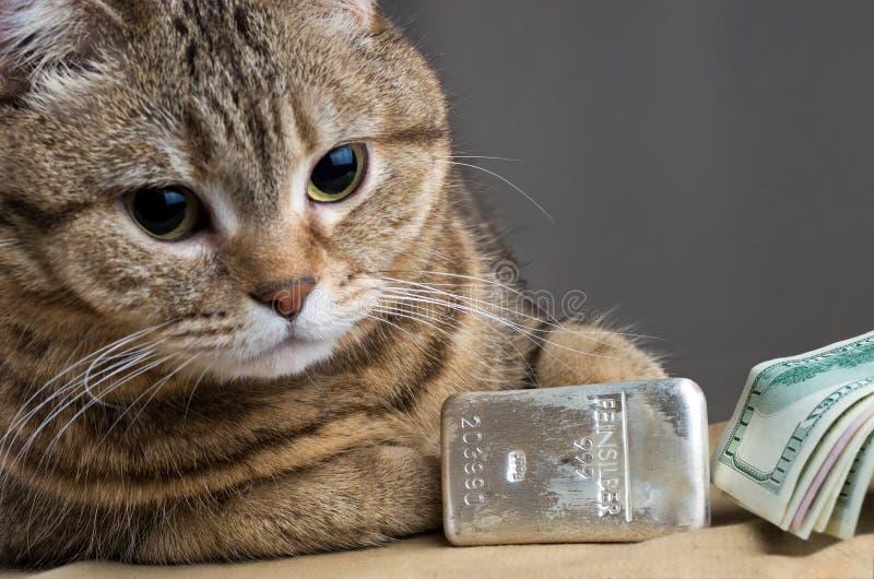 Um gato rico Cabeça do ` s do gato perto dos dólares do lingote de prata e do dinheiro foto de stock