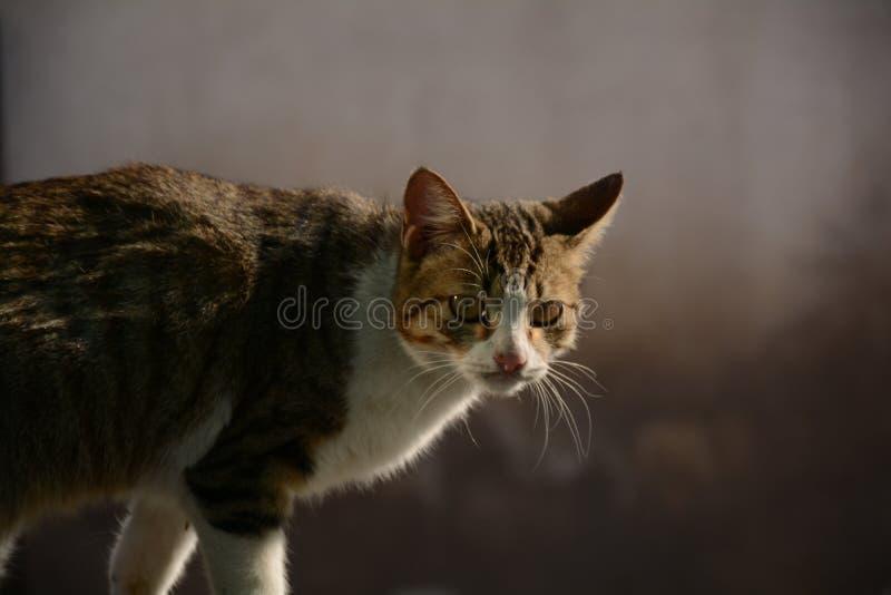 Um gato selvagem fotografia de stock royalty free