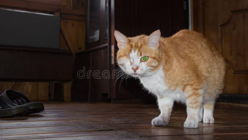 Um gato vermelho eyed fotos de stock