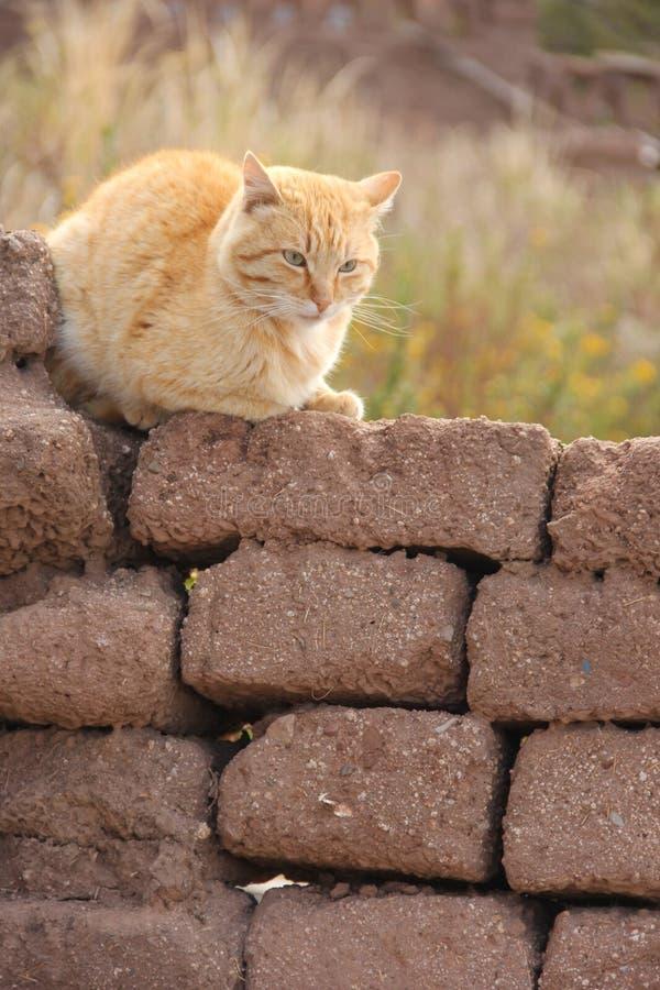 Um gato vermelho que senta-se em uma parede fotografia de stock