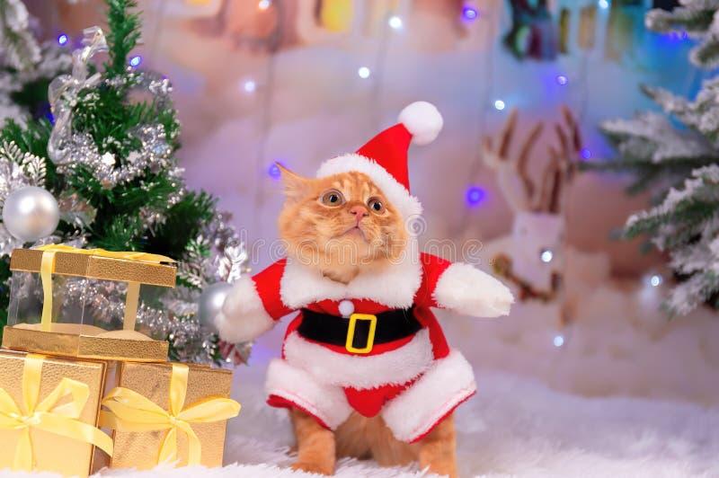 Um gato vermelho vestido como Santa Claus está sentando-se perto dos presentes fotografia de stock royalty free