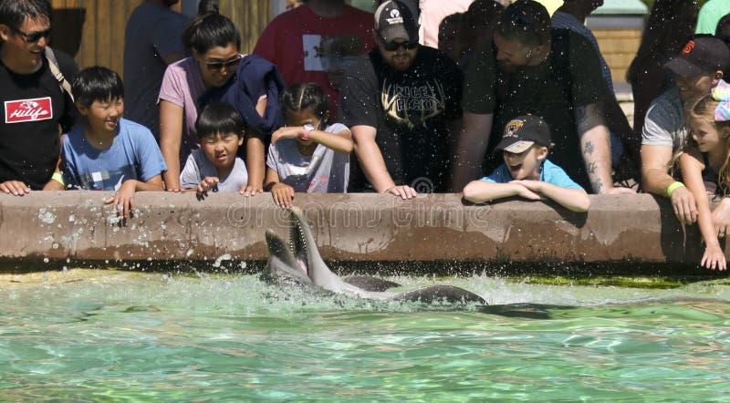 Um golfinho se realiza por uma multidão, San Diego, CA, EUA fotografia de stock royalty free