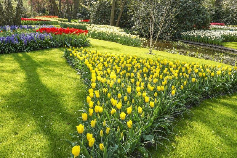 Um gramado verde bonito enchido com as camas de flor com as tulipas amarelas e vermelhas, os jacintos roxos e os narcisos amarelo imagens de stock royalty free