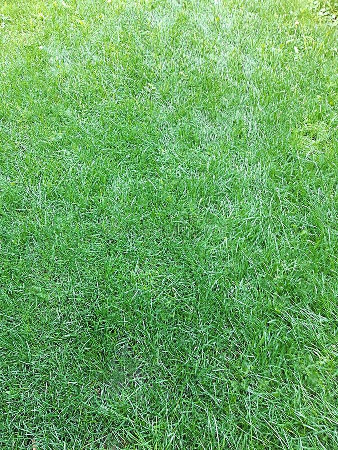 Um gramado verde, fundo natural excelente fotografia de stock