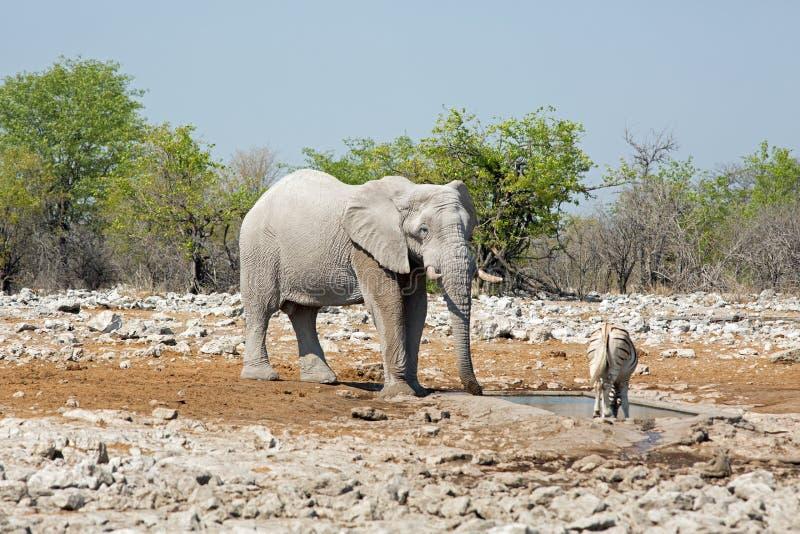 Um grande elefante está perto de um waterhole com um oryx imagens de stock royalty free