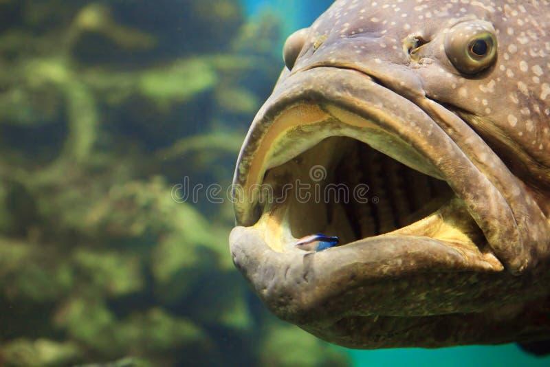 Um grande peixe imagem de stock