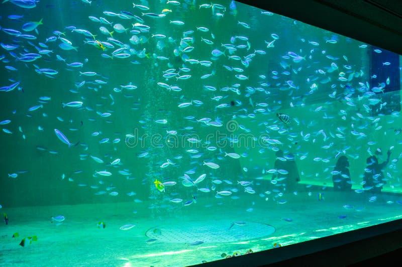 Um grande tanque da água com muitos peixes em um aquário imagem de stock royalty free