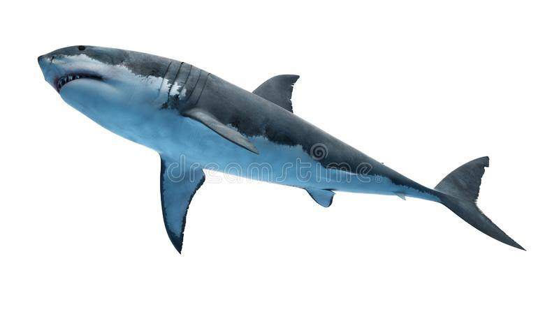 Um grande tubarão branco ilustração royalty free