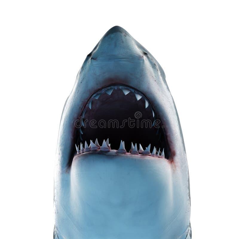 Um grande tubarão branco ilustração do vetor