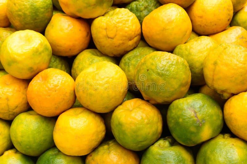 Um grupo da laranja, tipo de citrinos, tiro do estúdio, fim acima Sumário colorido sem emenda imagens de stock