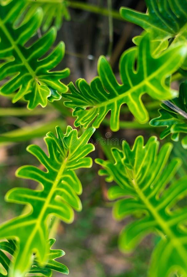 Um grupo das folhas verdes imagem de stock royalty free