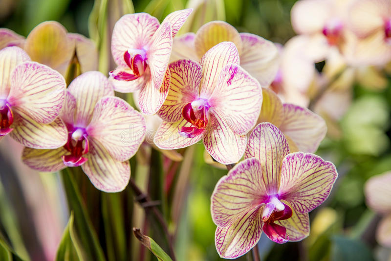 Um grupo das orquídeas imagens de stock royalty free