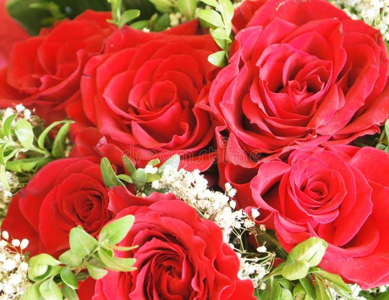 Um grupo das rosas fotografia de stock royalty free