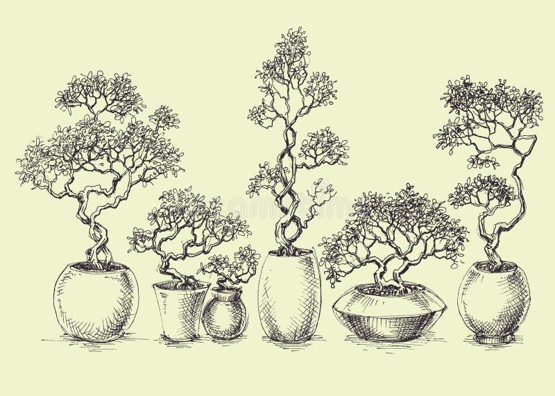 Um grupo de árvores isoladas dos bonsais ilustração stock