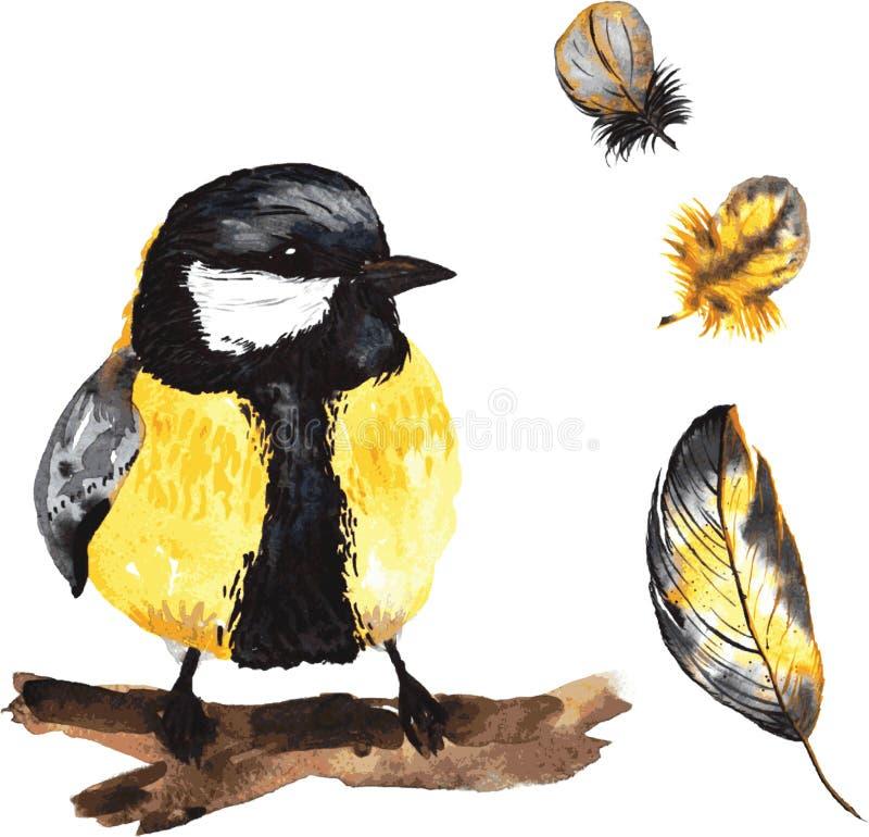 Um grupo de aquarela desenhado à mão que contém o Parus e a pena do pássaro imagem de stock royalty free