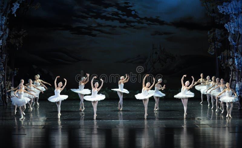 Um grupo de cisne-bailado branco bonito O Lago das Cisnes fotos de stock royalty free
