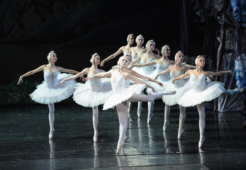 Um grupo de cisne-bailado branco bonito O Lago das Cisnes foto de stock