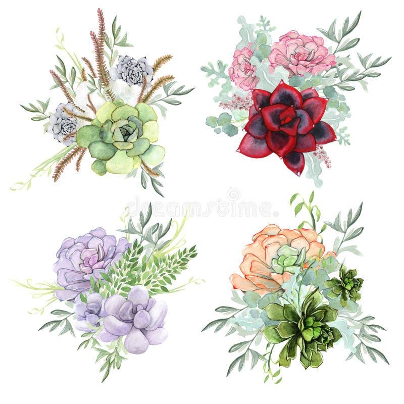 Um grupo de composições da aquarela feitas de flores suculentos ilustração stock