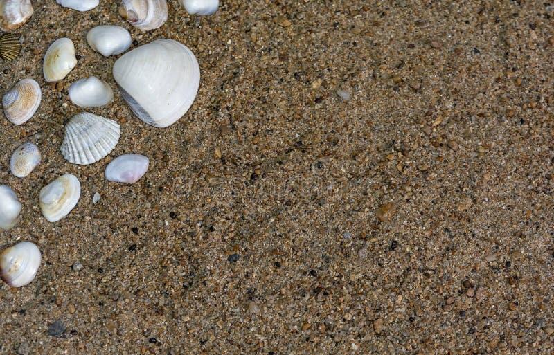 Um grupo de conchas do mar pequenas bonitas com espaço da cópia fotos de stock