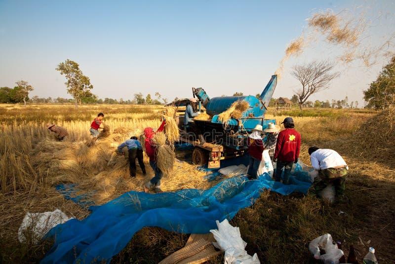 Um grupo de fazendeiros tailandeses usa uma máquina para separar núcleos do arroz, em um campo do arroz em Tailândia do nordeste  imagens de stock royalty free