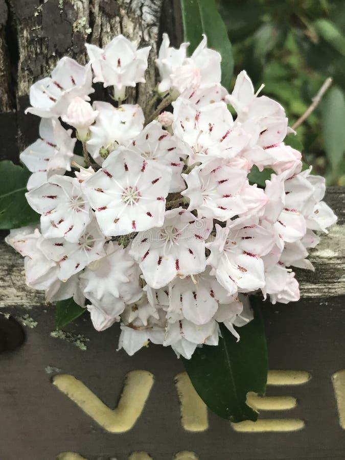 Um grupo de flores fotos de stock
