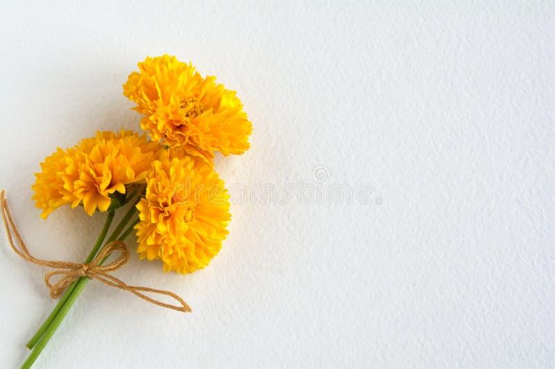Um grupo de flores amarelas do Coreopsis em uma folha branca da aquarela imagens de stock