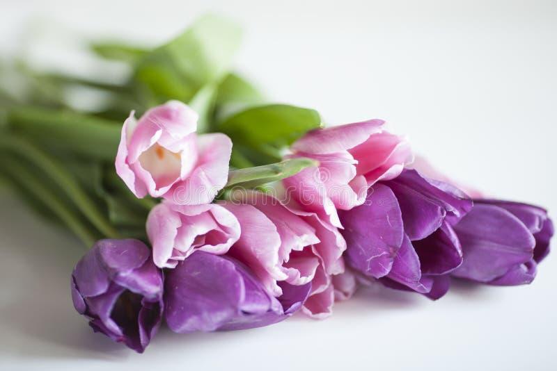Um grupo de flores da tulipa imagem de stock royalty free