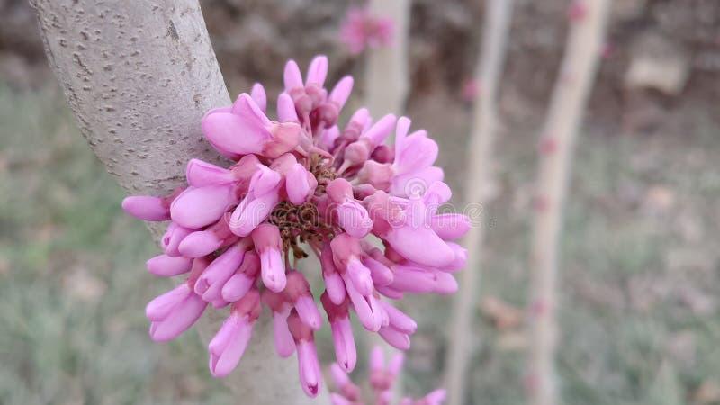 Um grupo de flores fúcsia como uma trombeta imagem de stock royalty free