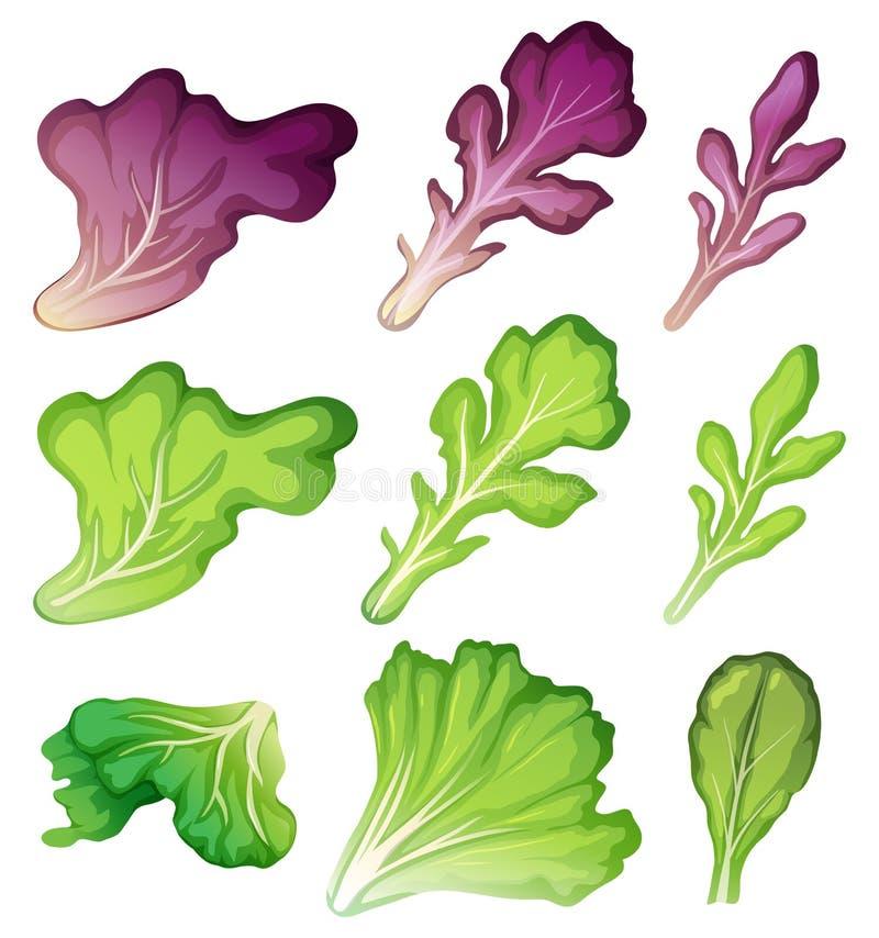 Um grupo de folha da salada ilustração stock