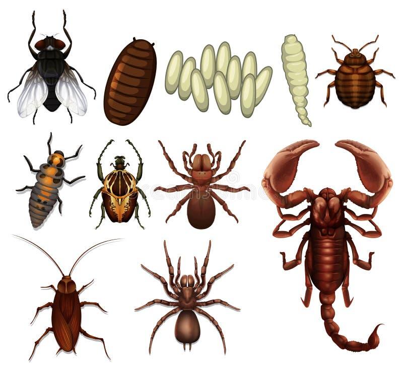 Um grupo de inseto ilustração stock