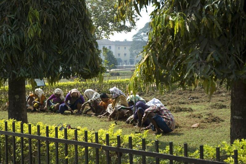 Um grupo de mulheres indianas que trabalham no jardim Mulher indiana Índia, Deli nova 29 de janeiro de 2009 imagens de stock