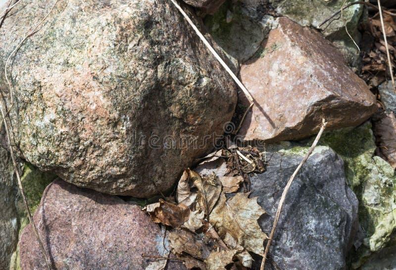 Um grupo de pedras coloridas nas folhas caídas foto de stock royalty free