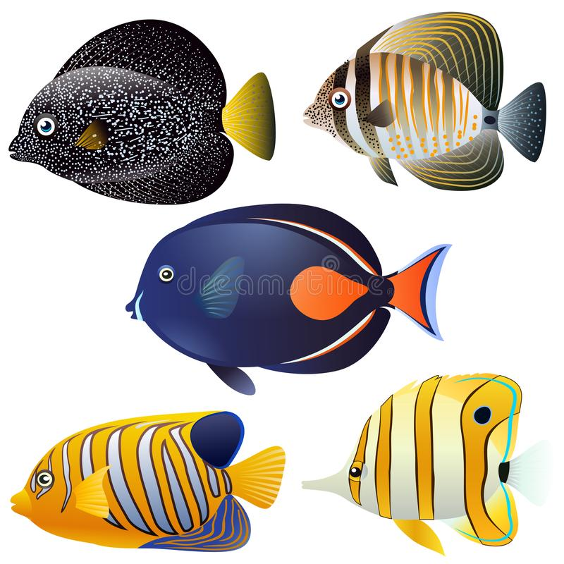 Um grupo de peixes exóticos isolados ilustração royalty free