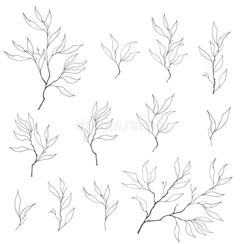 Um grupo de ramos do contorno em um fundo branco ilustração do vetor
