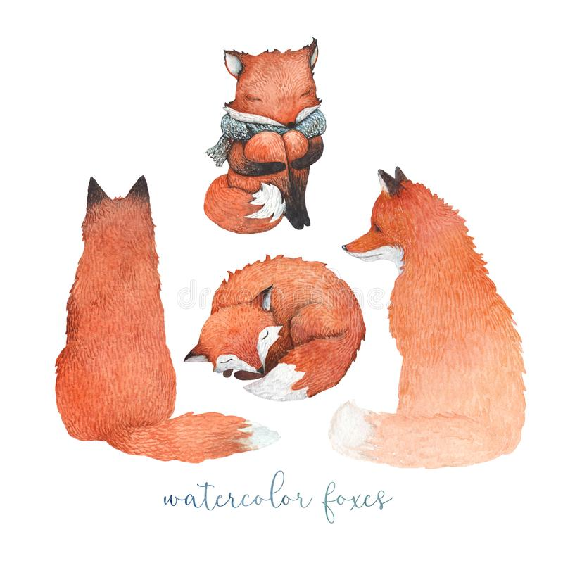 Um grupo de raposas da aquarela ilustração stock