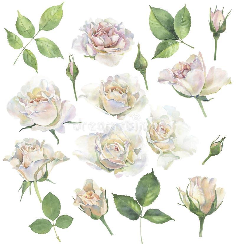 Um grupo de rosas para felicitações ilustração do vetor