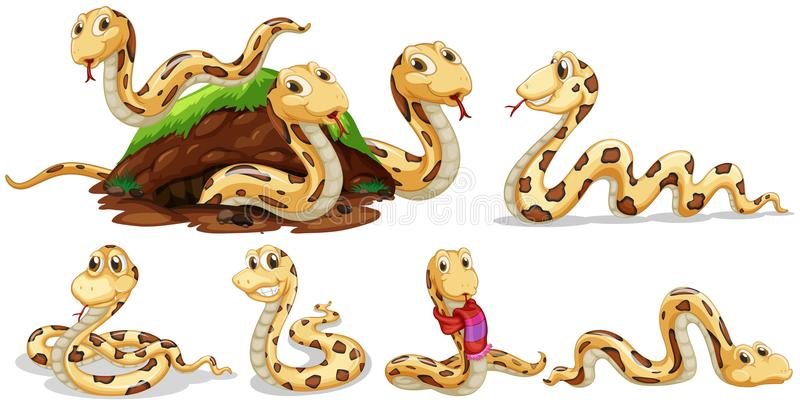 Um grupo de serpente no fundo branco ilustração royalty free